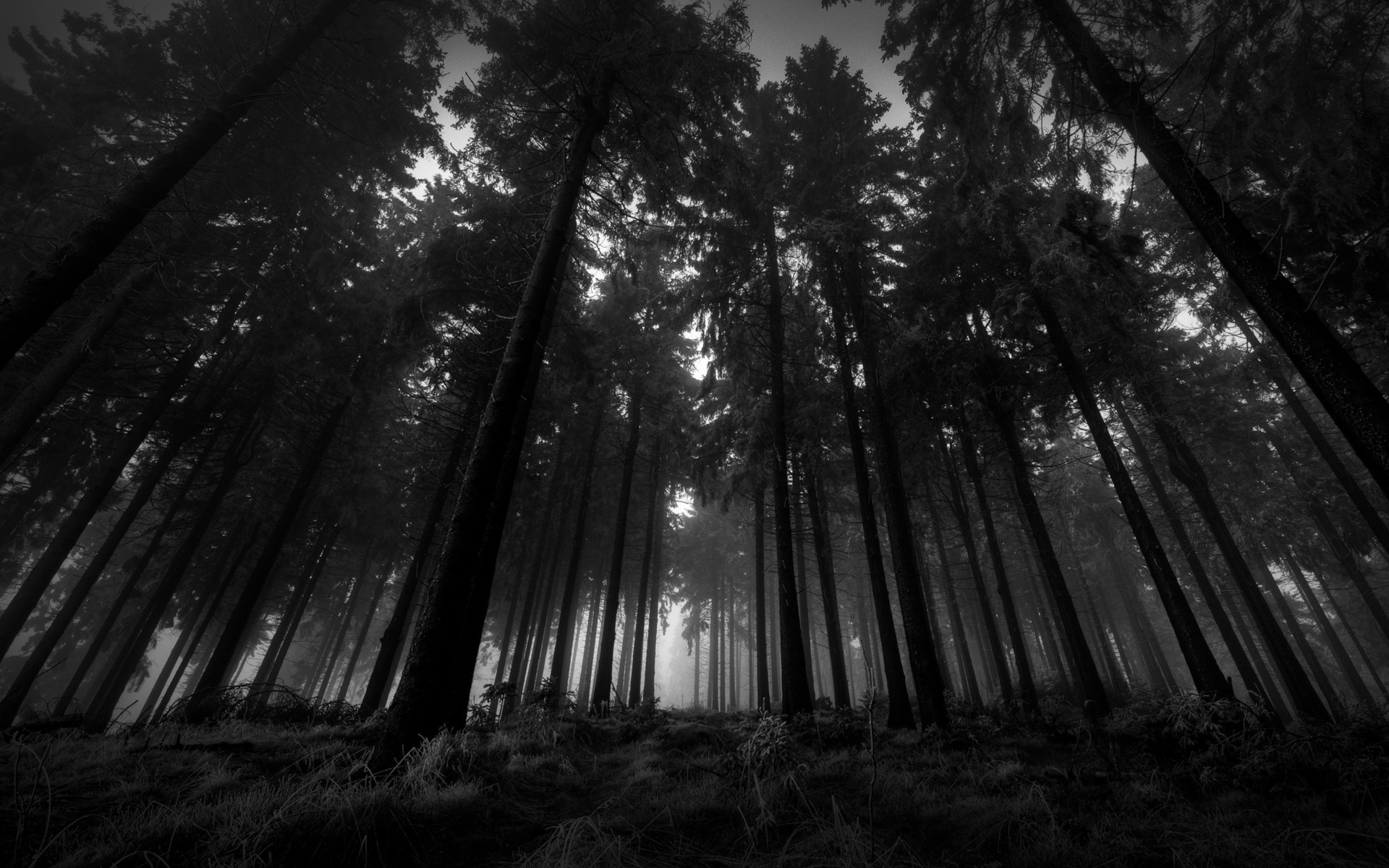 Dark Woods Wallpapers  Wallpaper  1920x1200