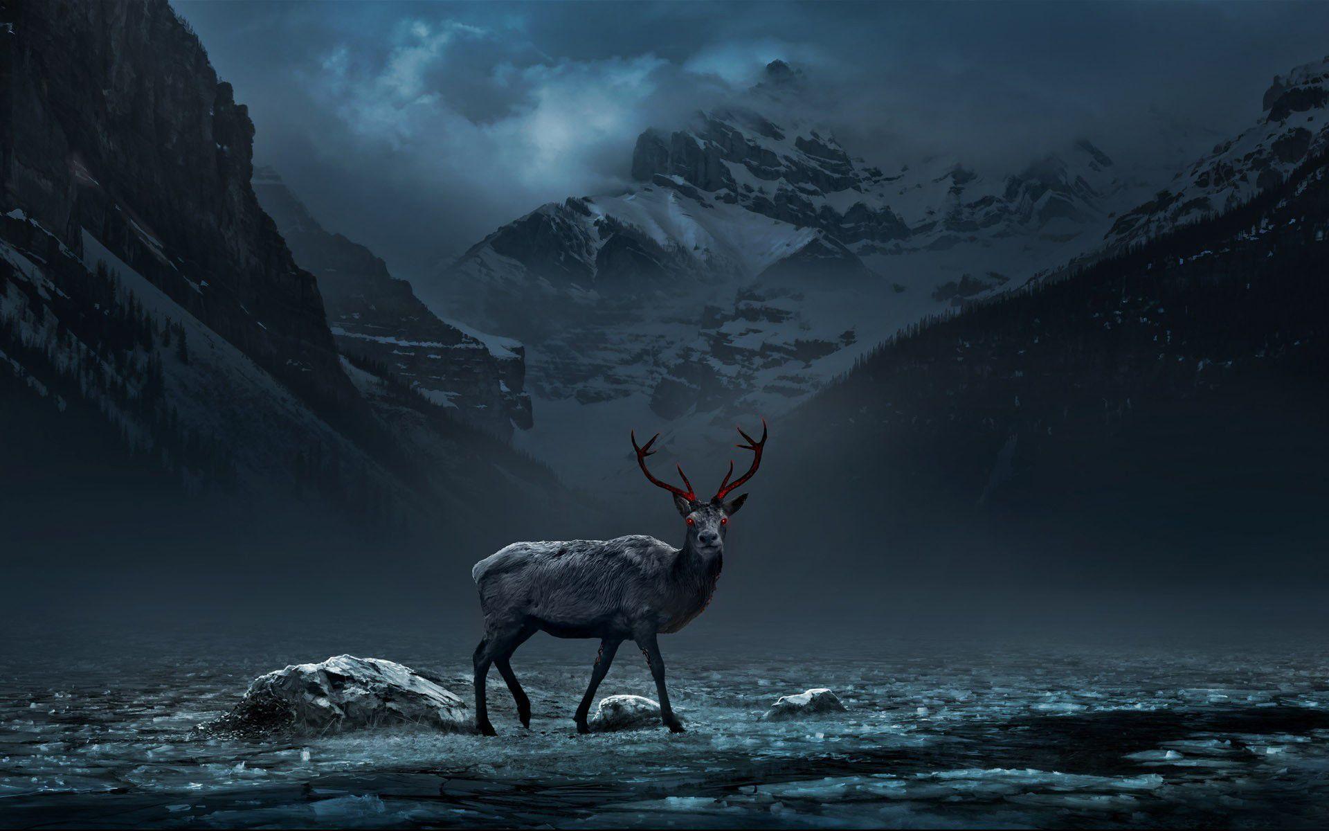 deer desktop wallpapers wallpaper 1920x1200