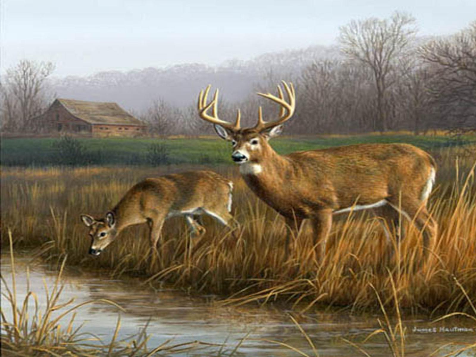 Deer Hunting Wallpapers  Best Collection Of Deer Wallpapers on 1600x1200