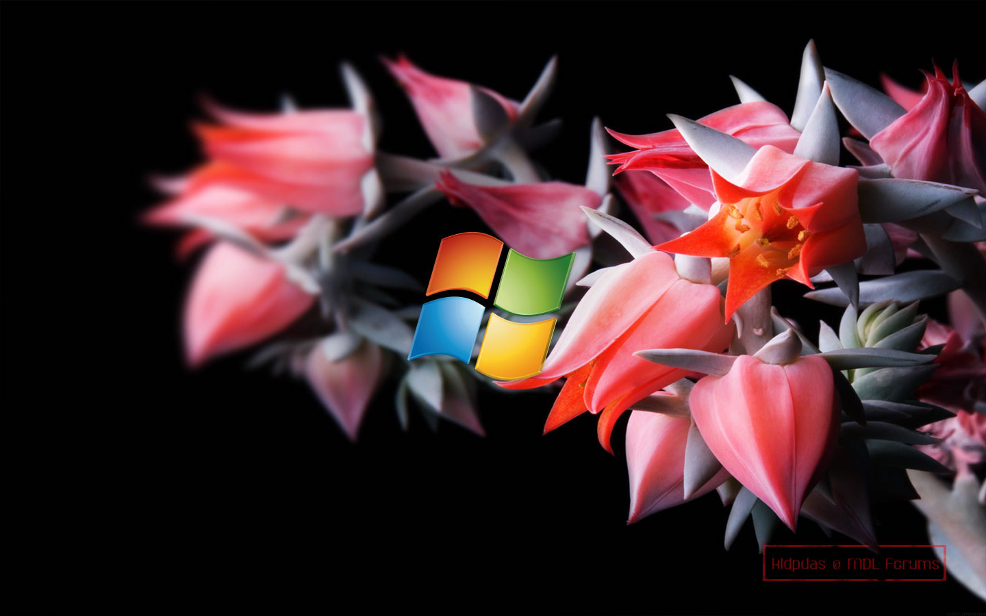 images about Windows  Wallpapers on Pinterest 1440x900