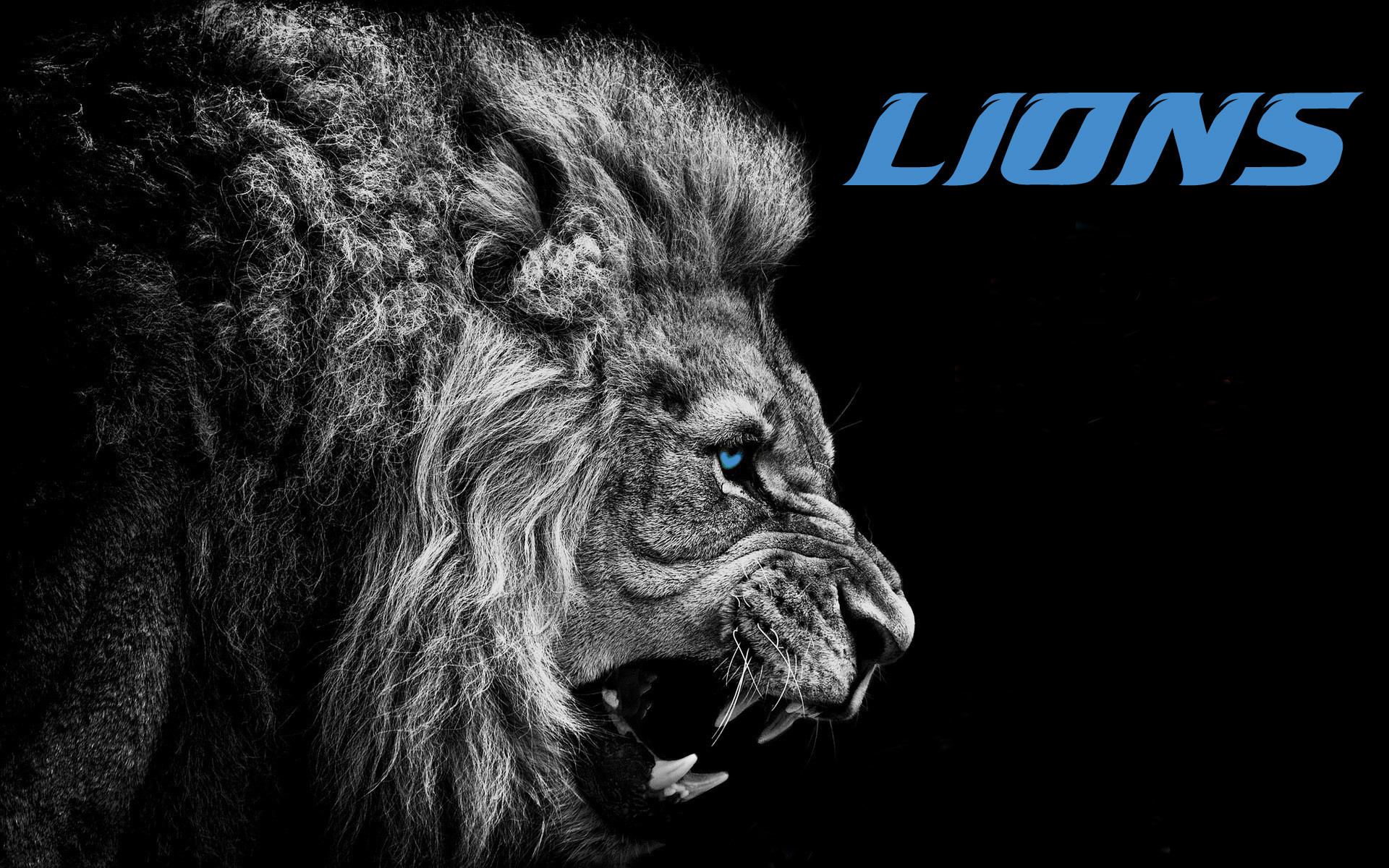 Detroit Lions Backgrounds  PixelsTalk Best Detroit Lions Wallpaper For Desktop  Wallpaper Box 1920x1200