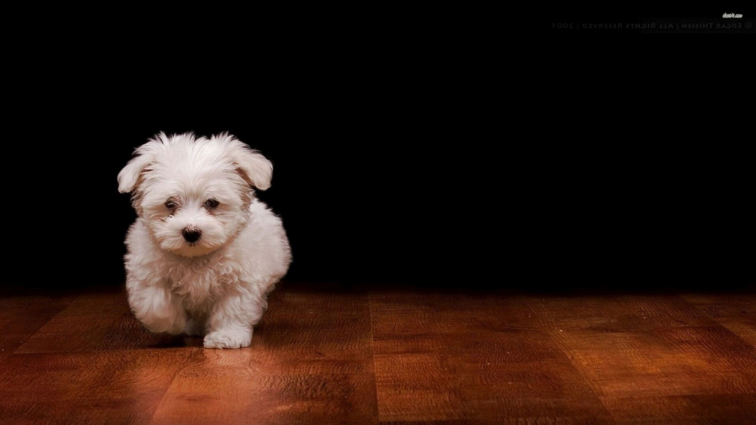 Free Puppy Dog Wallpaper Android Apps On Google Play 2560x1440
