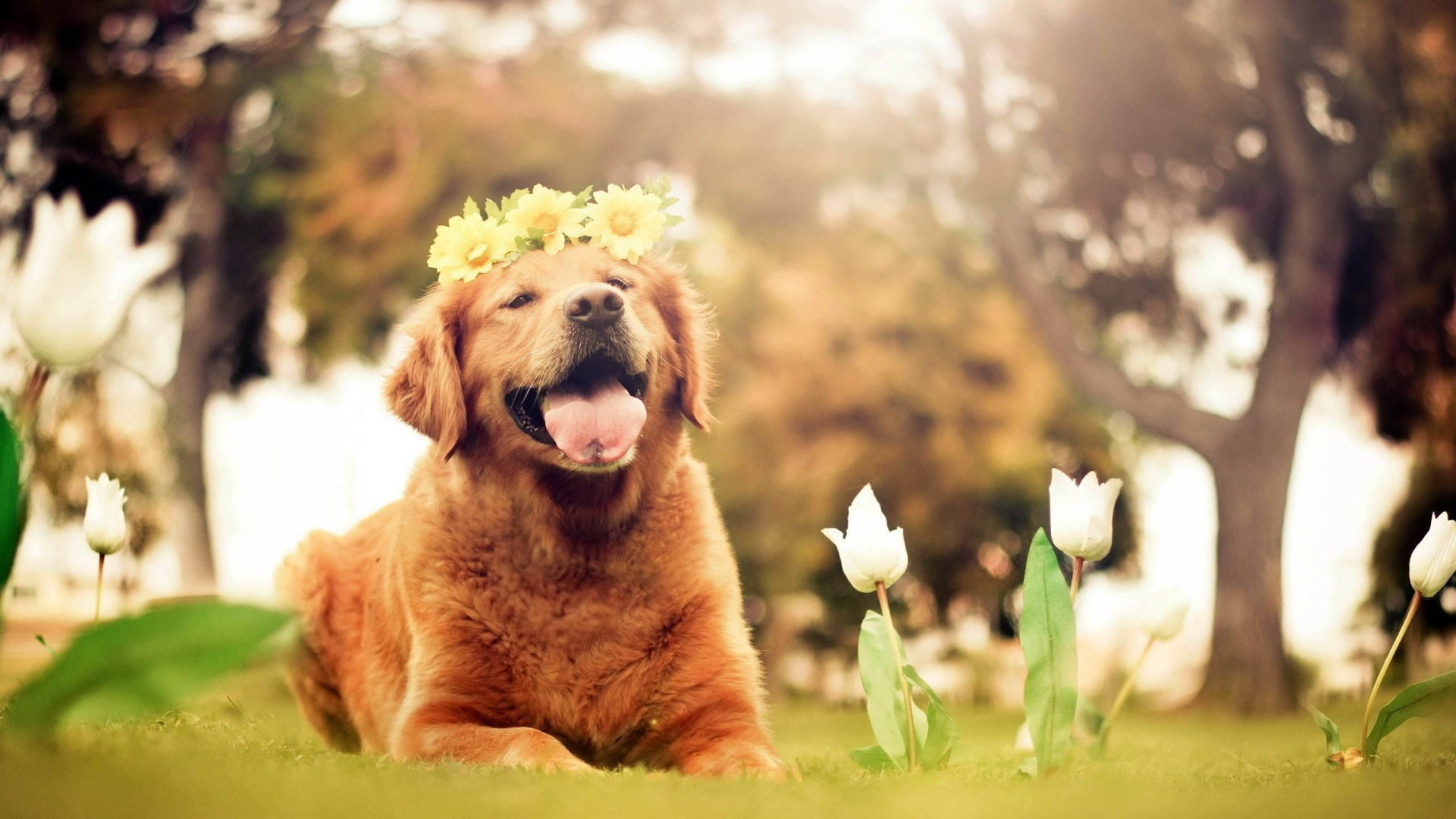 cute dog wallpapers wallpaper 1920x1080