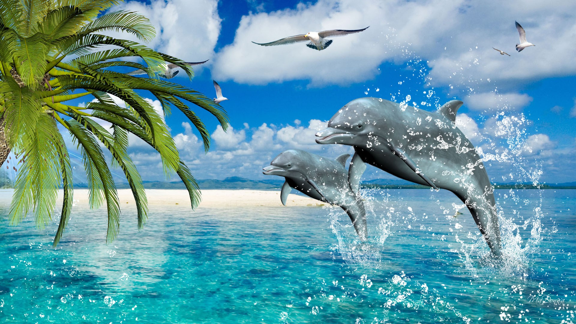 Gorgeous Collection Of Dolphin Desktop Wallpaper  DesignInstance 1920x1080