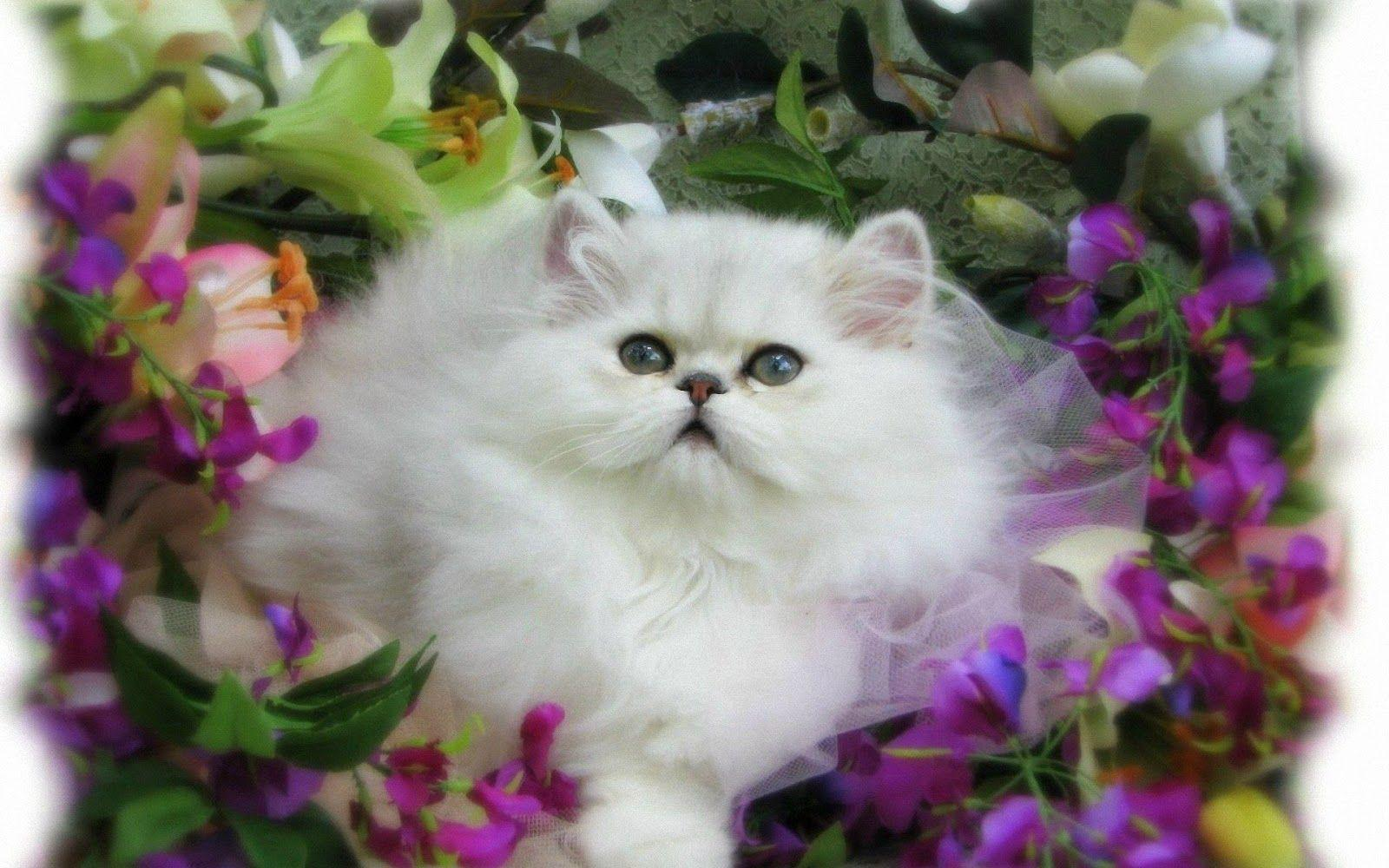 Download Wallpaper Kucing Lucu 10 Wallpapers – Adorable