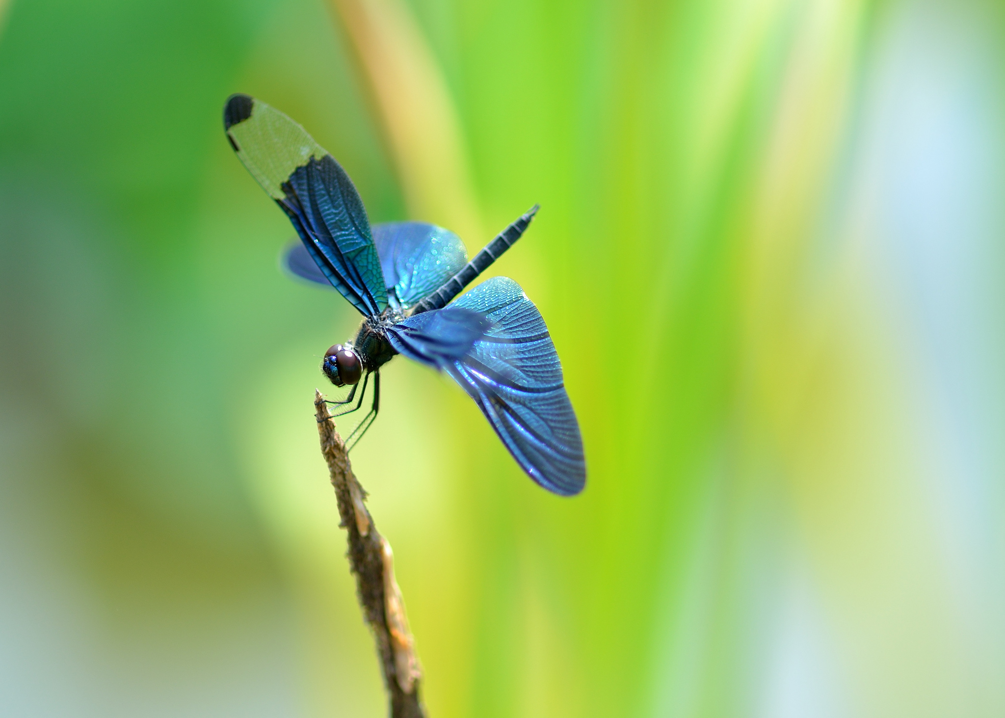 Dragonfly HD Wallpapers  Backgrounds  Wallpaper  2048x1463