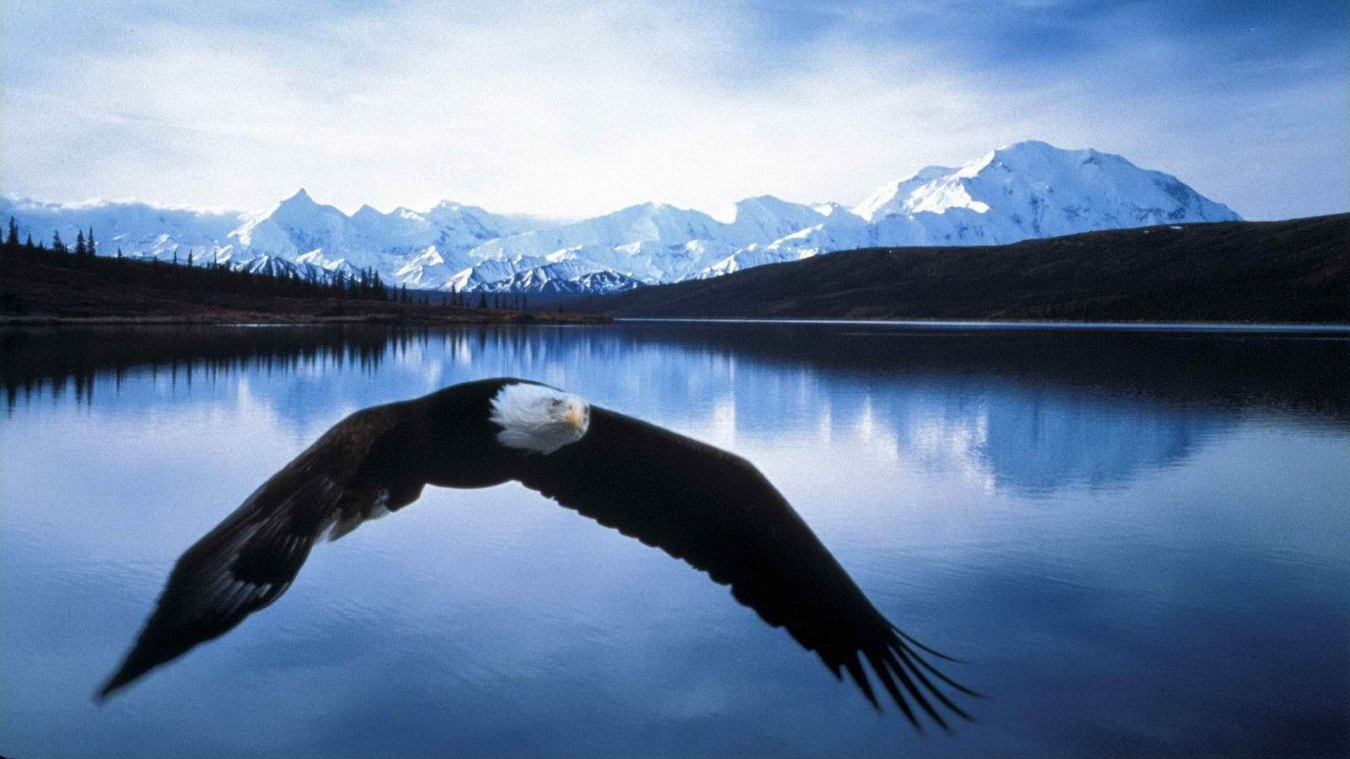 Eagle Wallpapers  Wallpaper  1920x1080