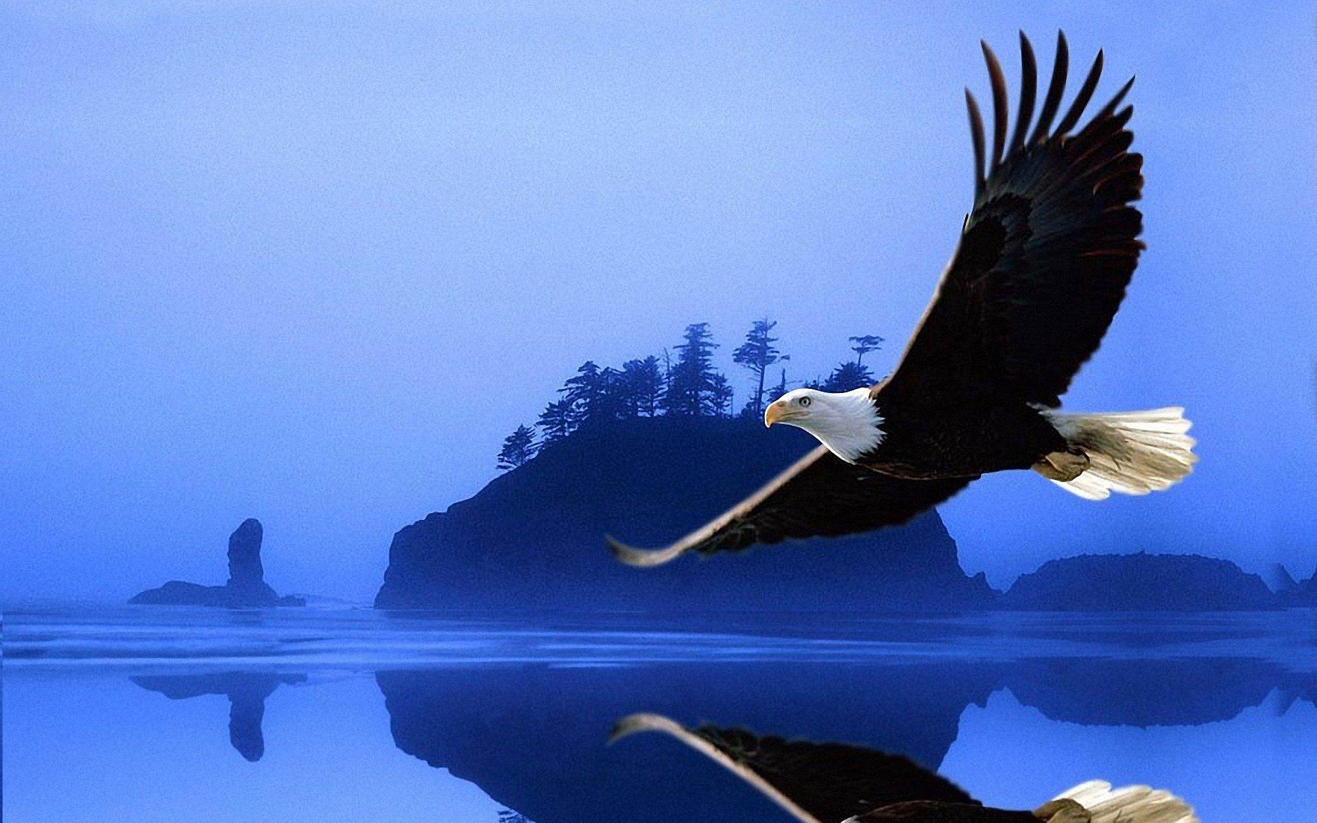 Golden Eagle HD Wallpapers  Backgrounds  Wallpaper  1920x1200