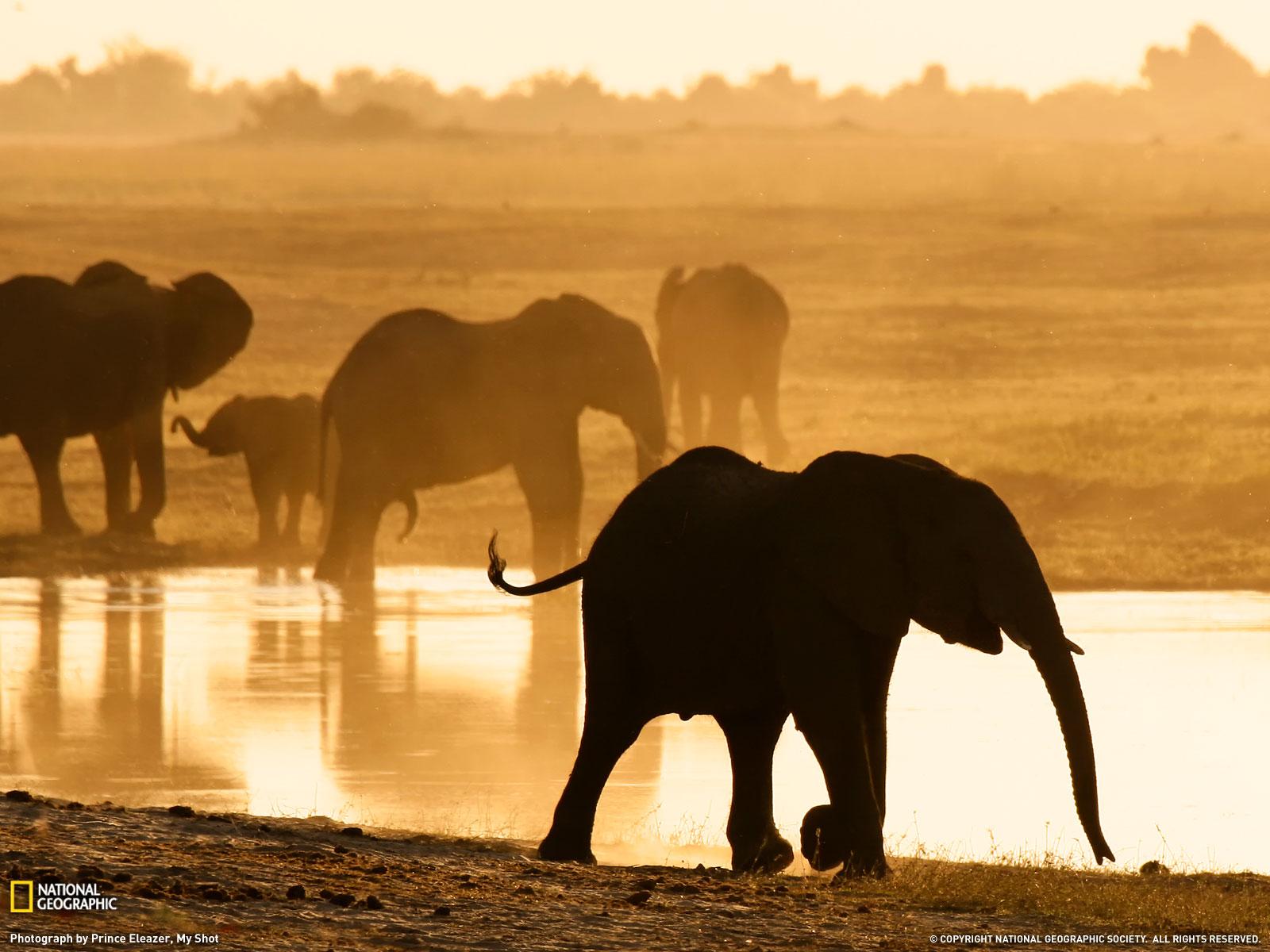 Stunning Elephant Wallpaper  Best Free Desktop HD