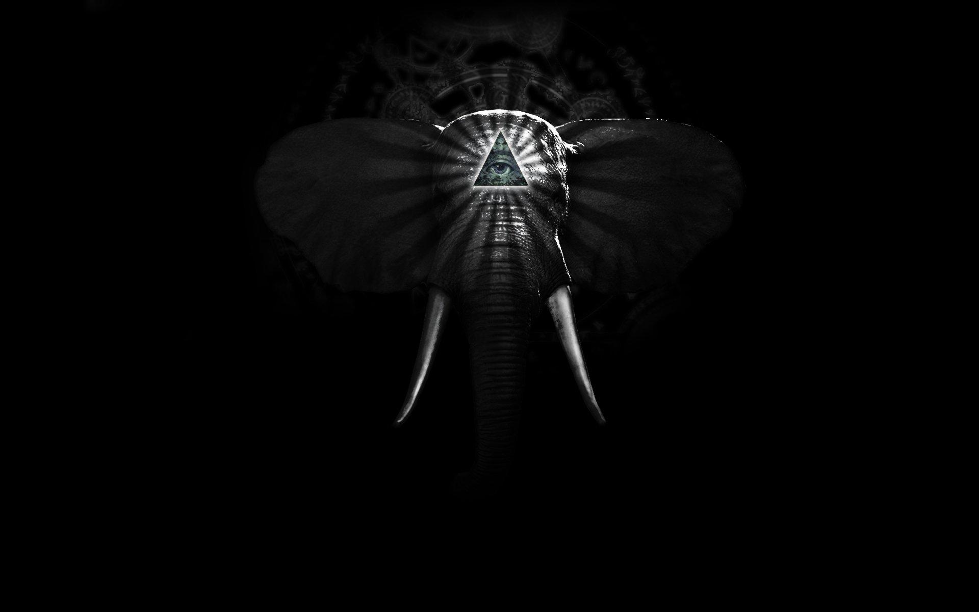 Elephant Hd Desktop Wallpaper High Definition Fullscreen