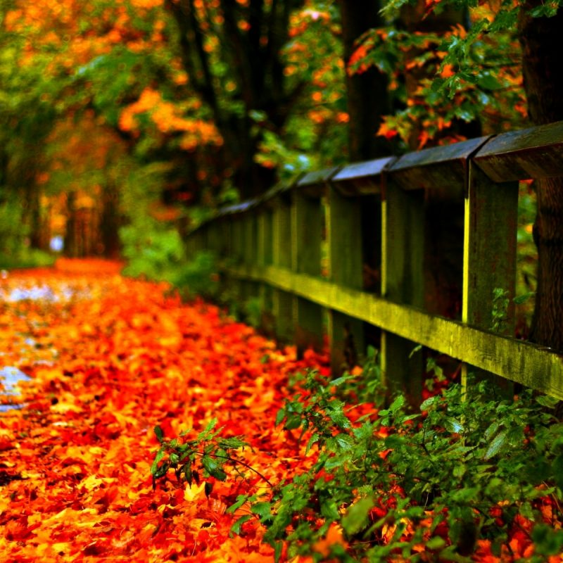 Most Popular Fall Foliage Wall Paper FULL HD p For PC e