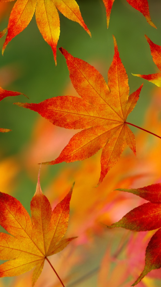 Fall Leaf Backgrounds Page  640x1136