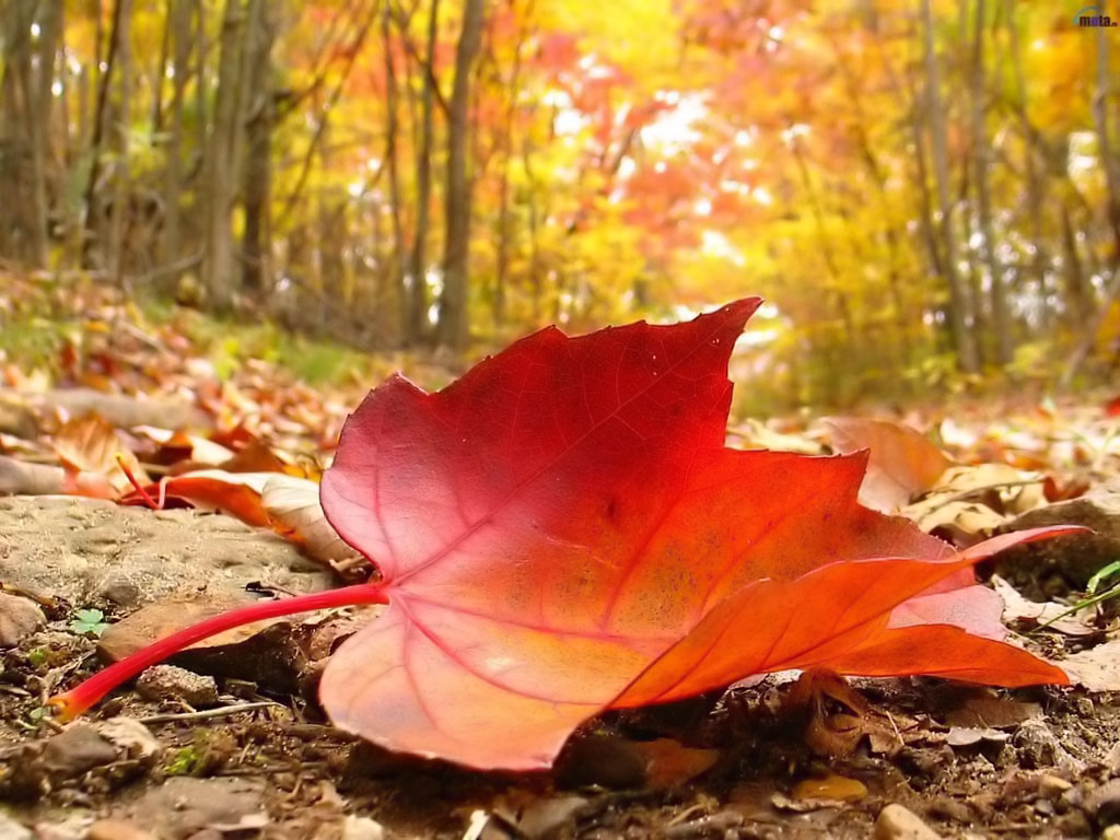 Best Ideas About Fall Leaves Background On Pinterest