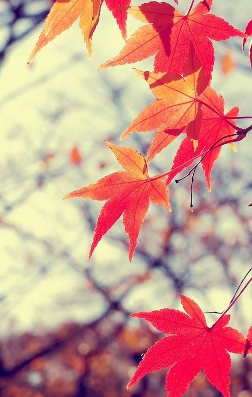IPhone Autumn Wallpaper 513x810