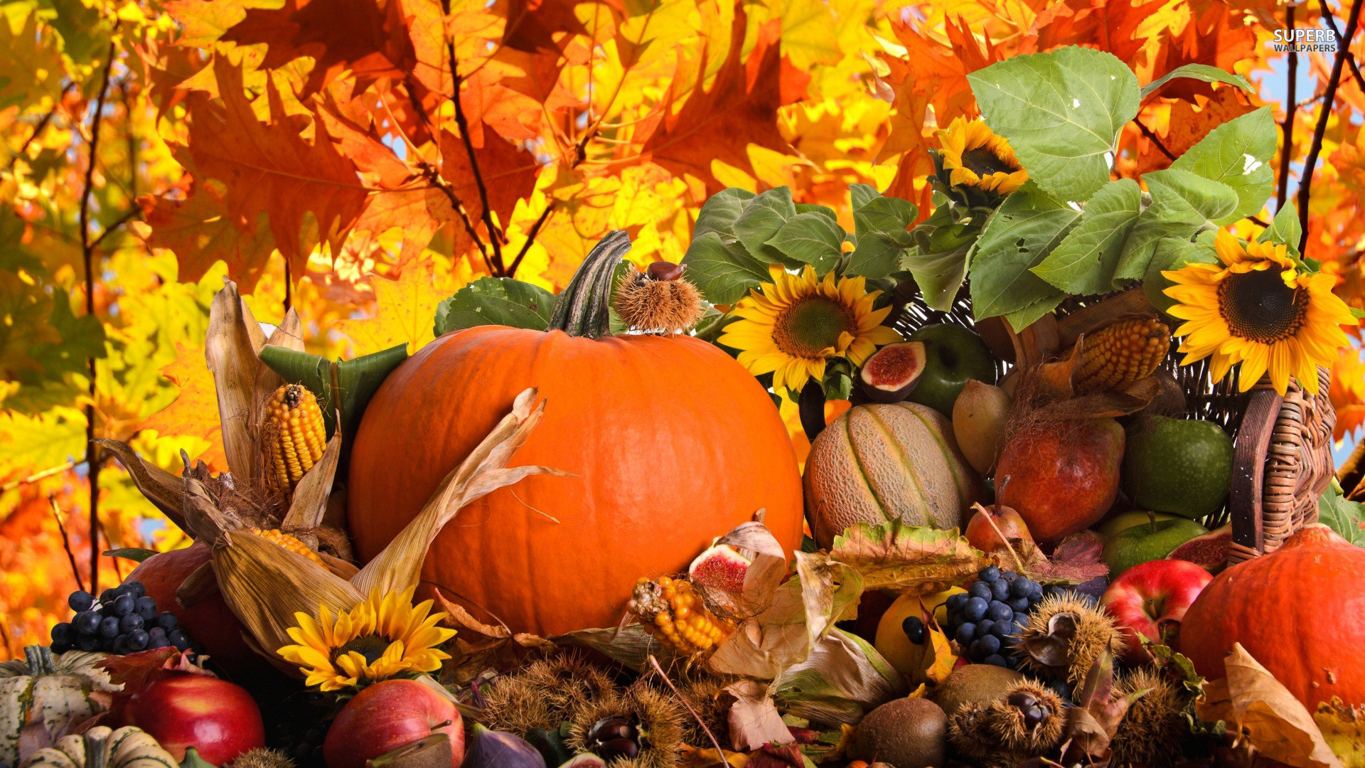 images about autumn on pinterest thanksgiving screensaver 1920x1080