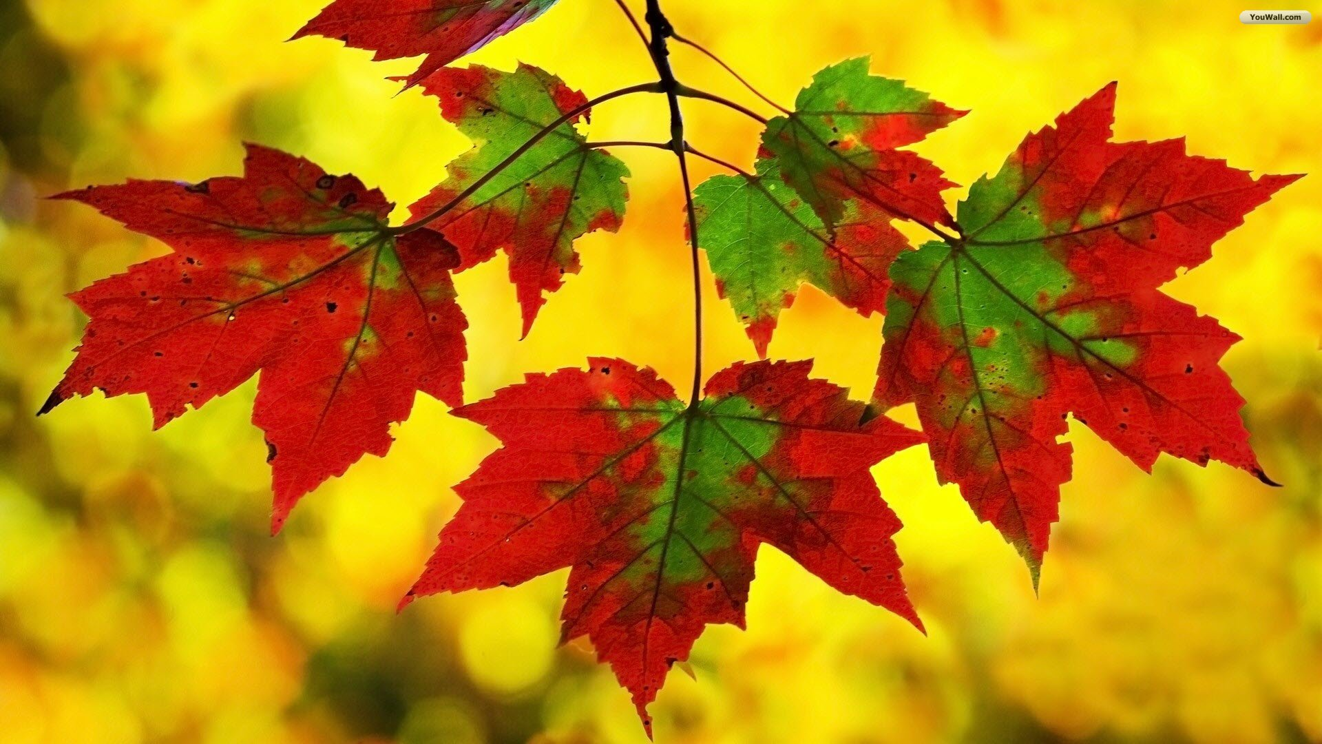 Android Wallpaper Fall Colors 1920x1080