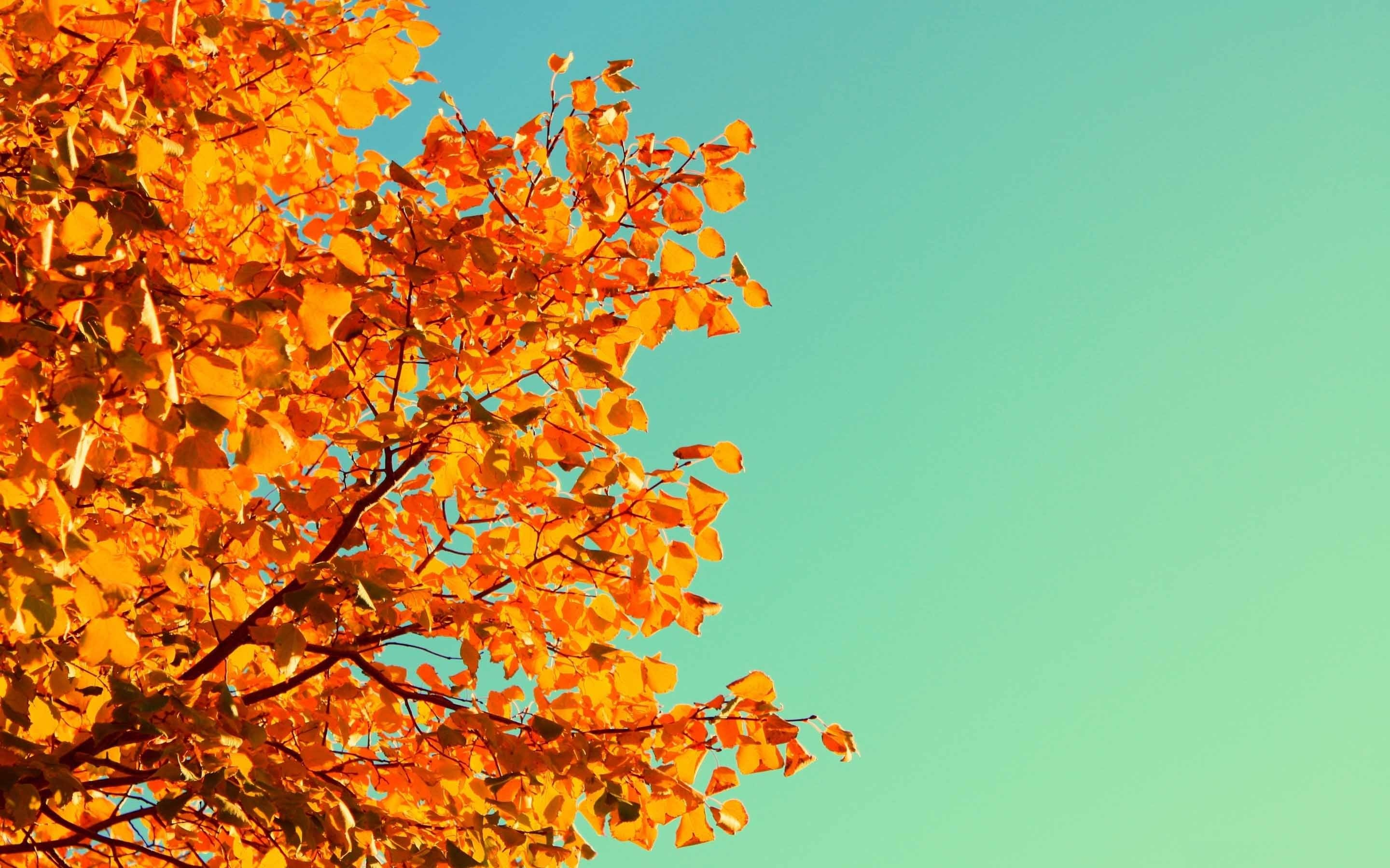 Fall desktop wallpaper ·① Download free awesome High Resolution