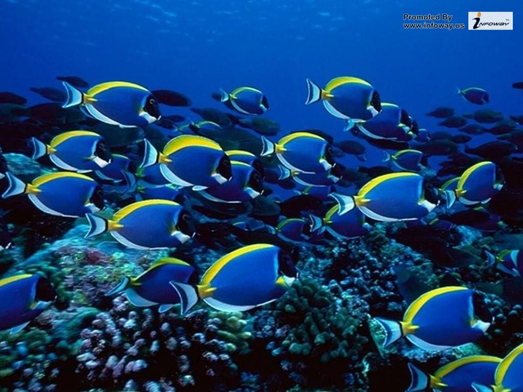 Simple Wallpaper Mobile Fish - Fish-Animal-Pictures-Wallpapers-041  Picture_64165.jpg