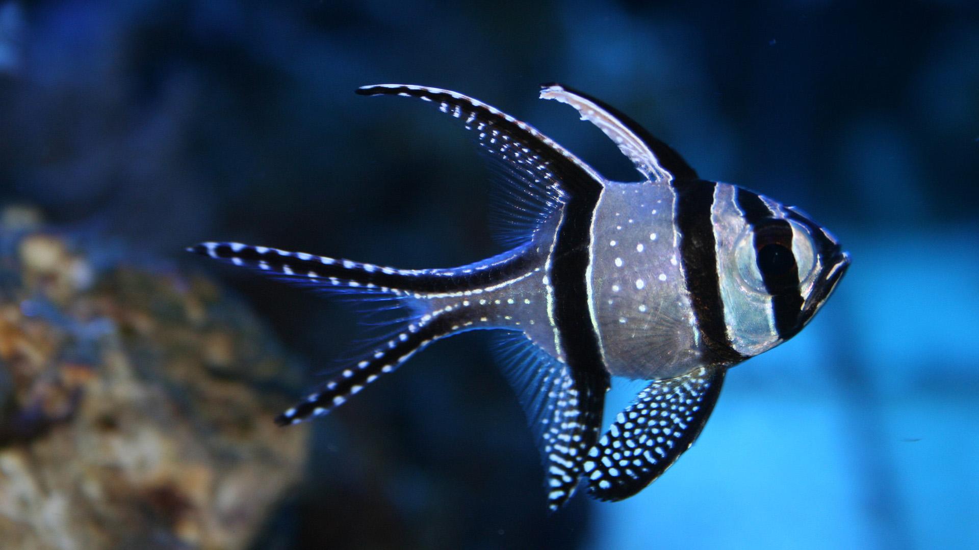 Simple Wallpaper Mobile Fish - Fish-Image-Wallpapers-020  Picture_64165.jpg