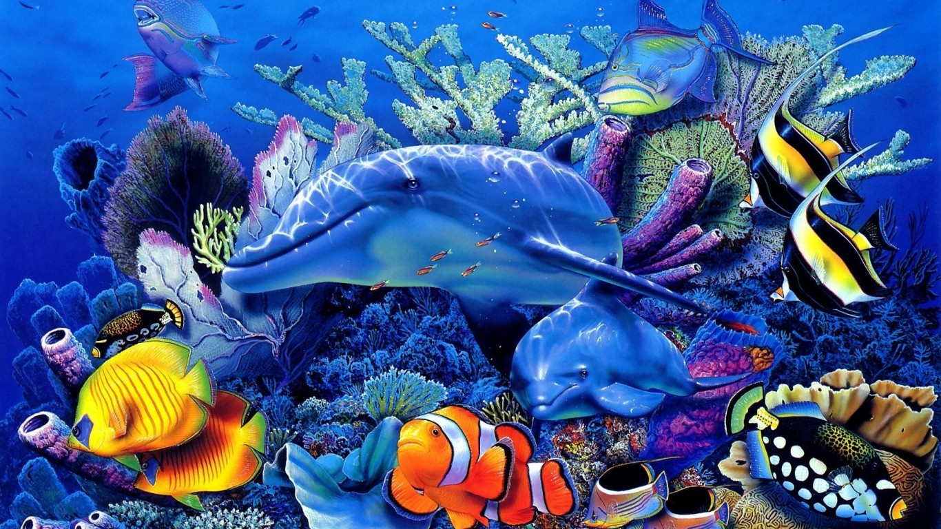 Fish Live Wallpapers For Android Android Live Wallpaper