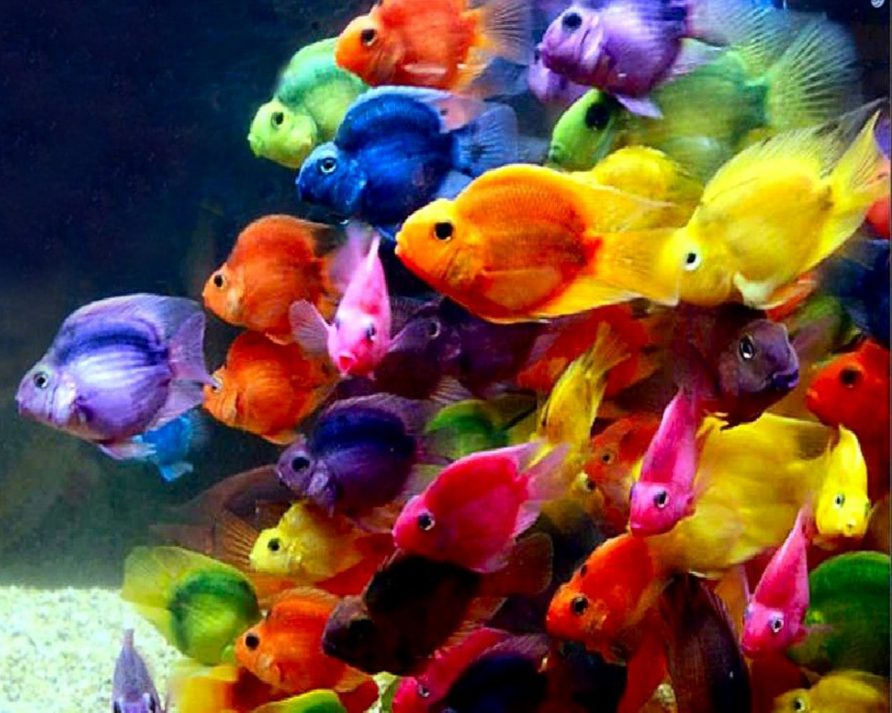 Beautiful Fish Wallpapers HD Pictures  One HD Wallpaper Pictures 1280x1024