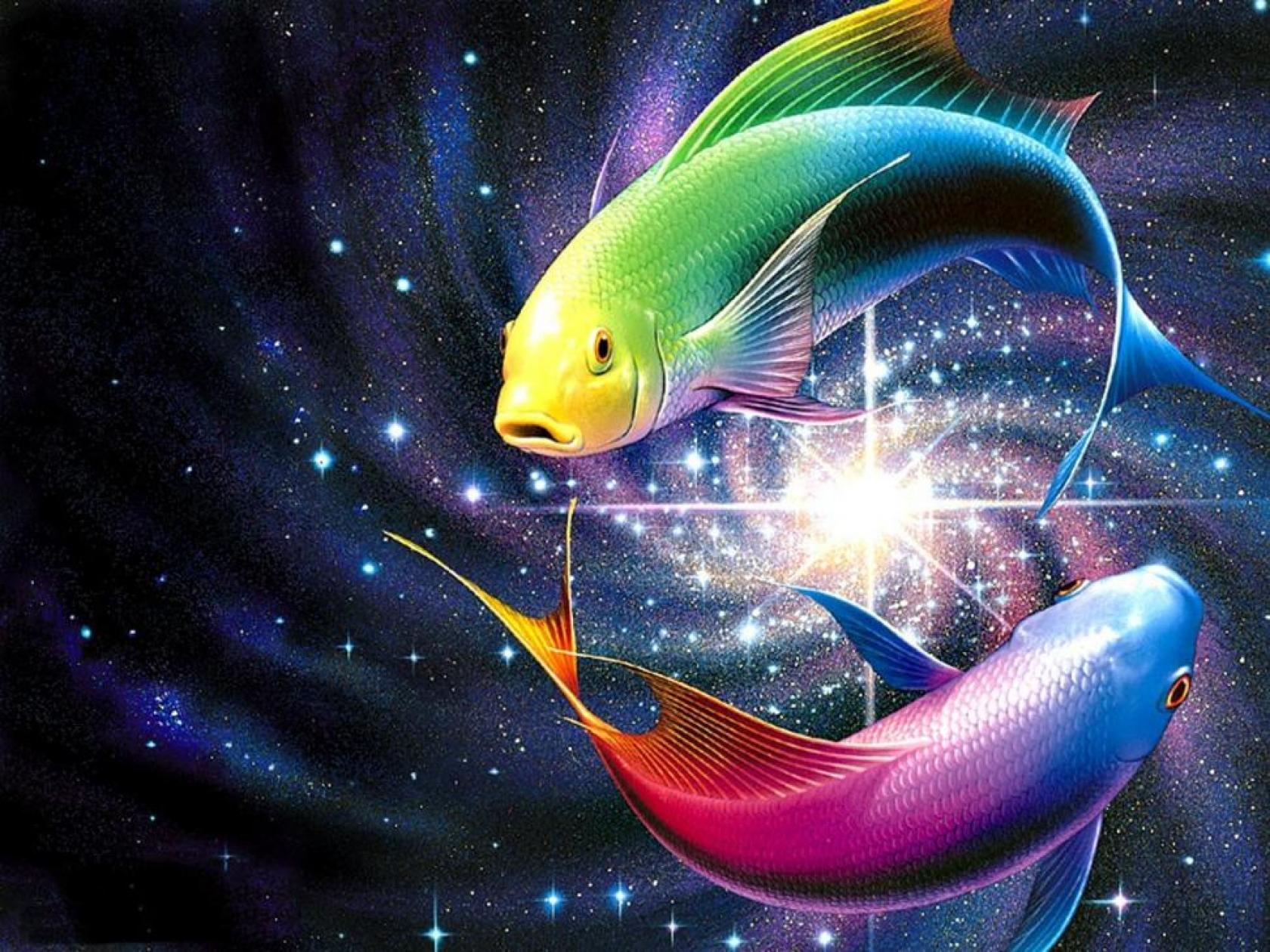 Fishes HD Wallpapers  Backgrounds  Wallpaper  1680x1260