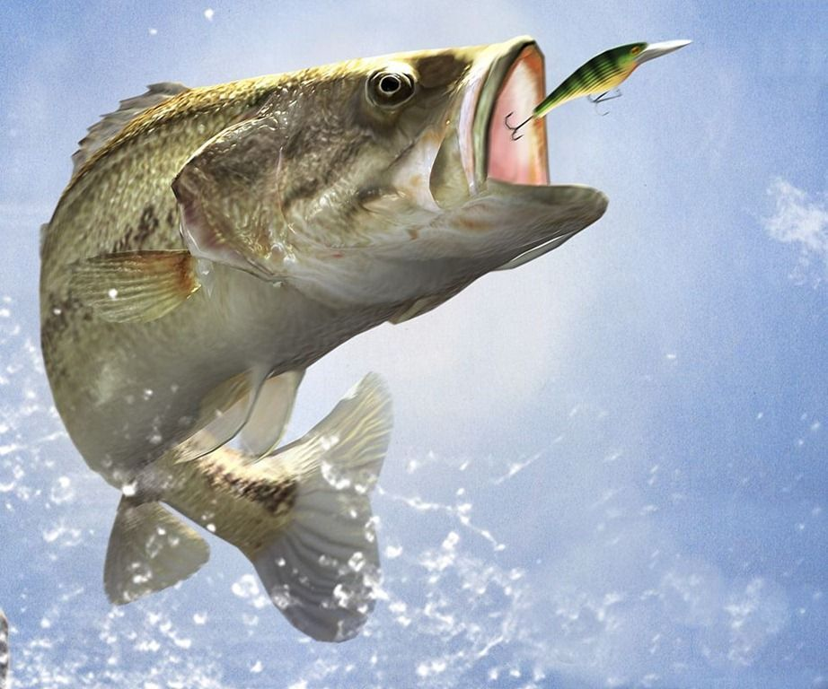 Sport Wallpapers / Fishing Wallpapers Download HD Wallpapers and 922x768