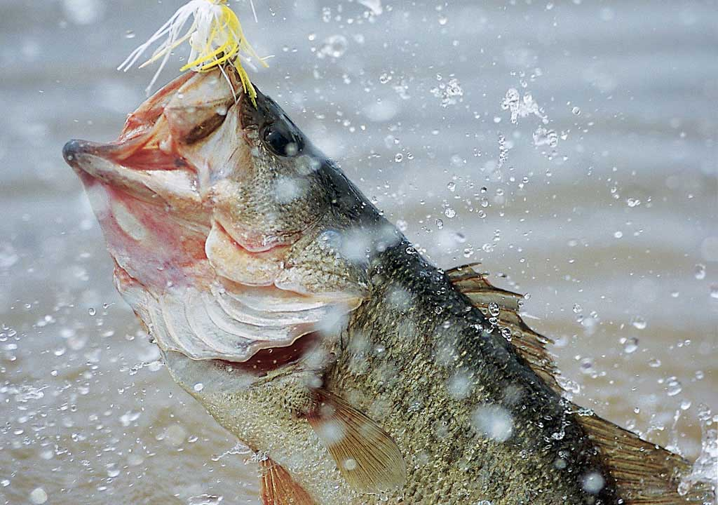 Bass Fishing Wallpaper Backgrounds  Wallpaper  1024x720