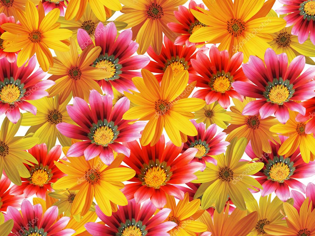 Floral Background Vectors, Photos and PSD files  Free Download 1024x768