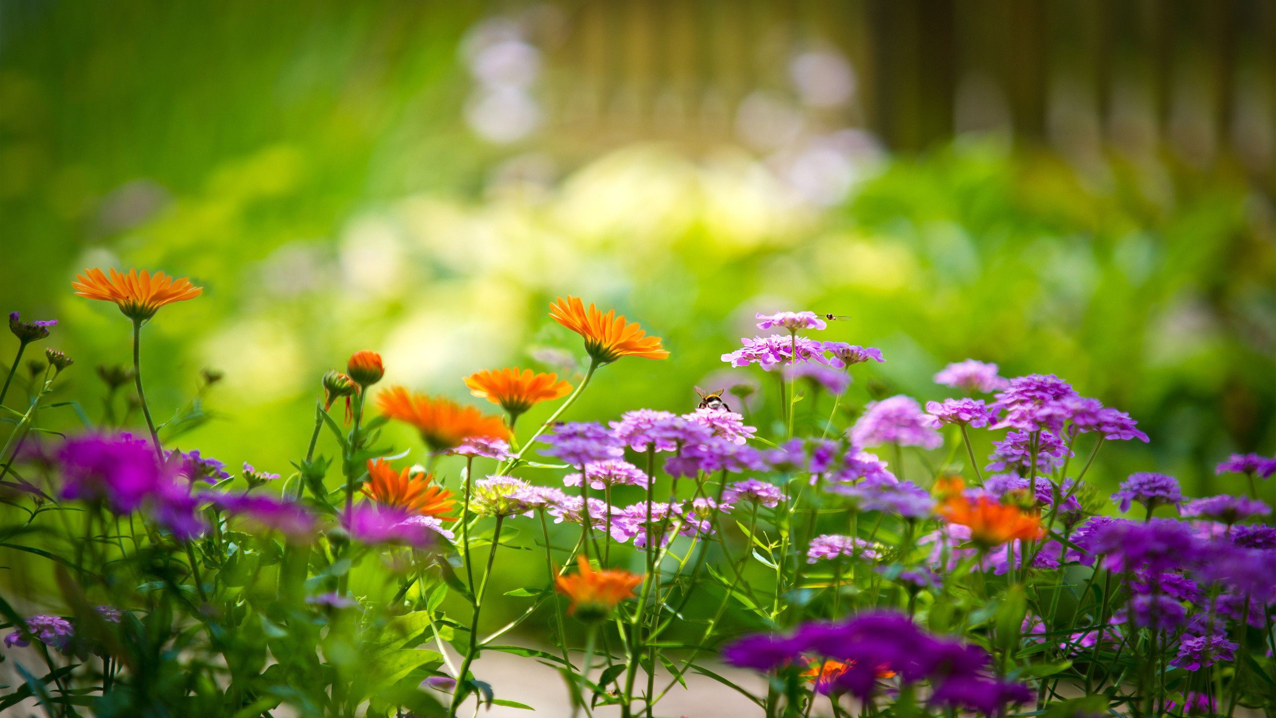 Flower Garden Backgrounds PromotionShop for Promotional Flower 2560x1440
