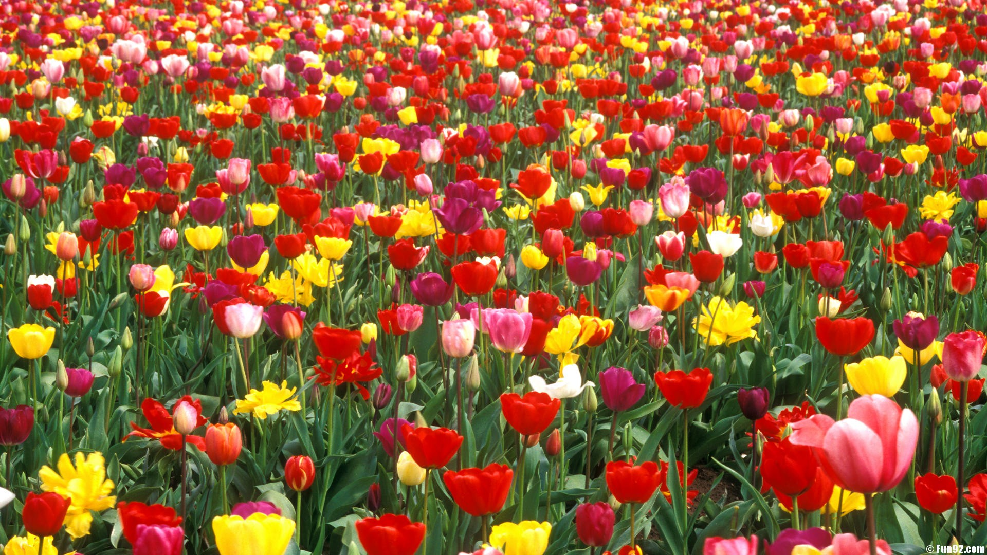 Affordable Flowers Gardens Wallpapers For Desktop Full Size With