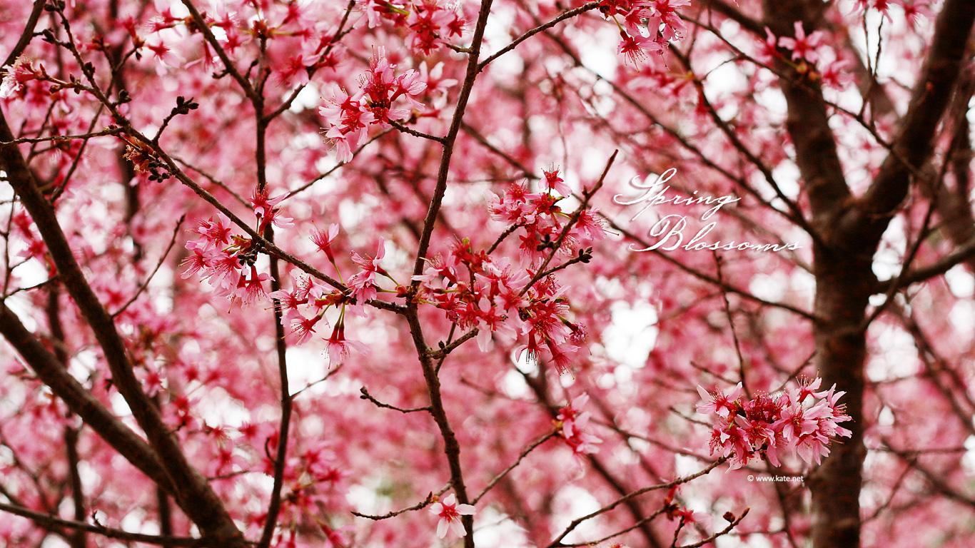Flower Backgrounds Tumblr PixelsTalk Tumblr Flower Wallpaper HD