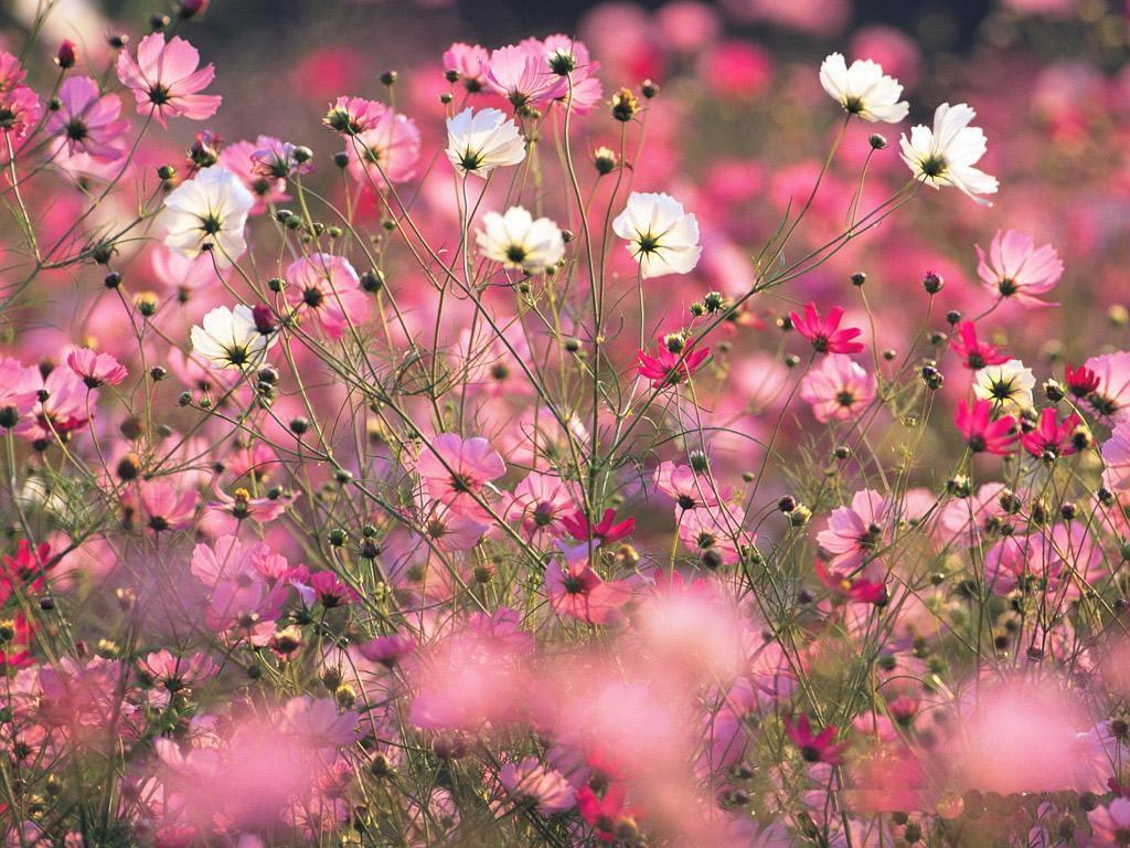 tumblr wallpaper floral hd - photo #5