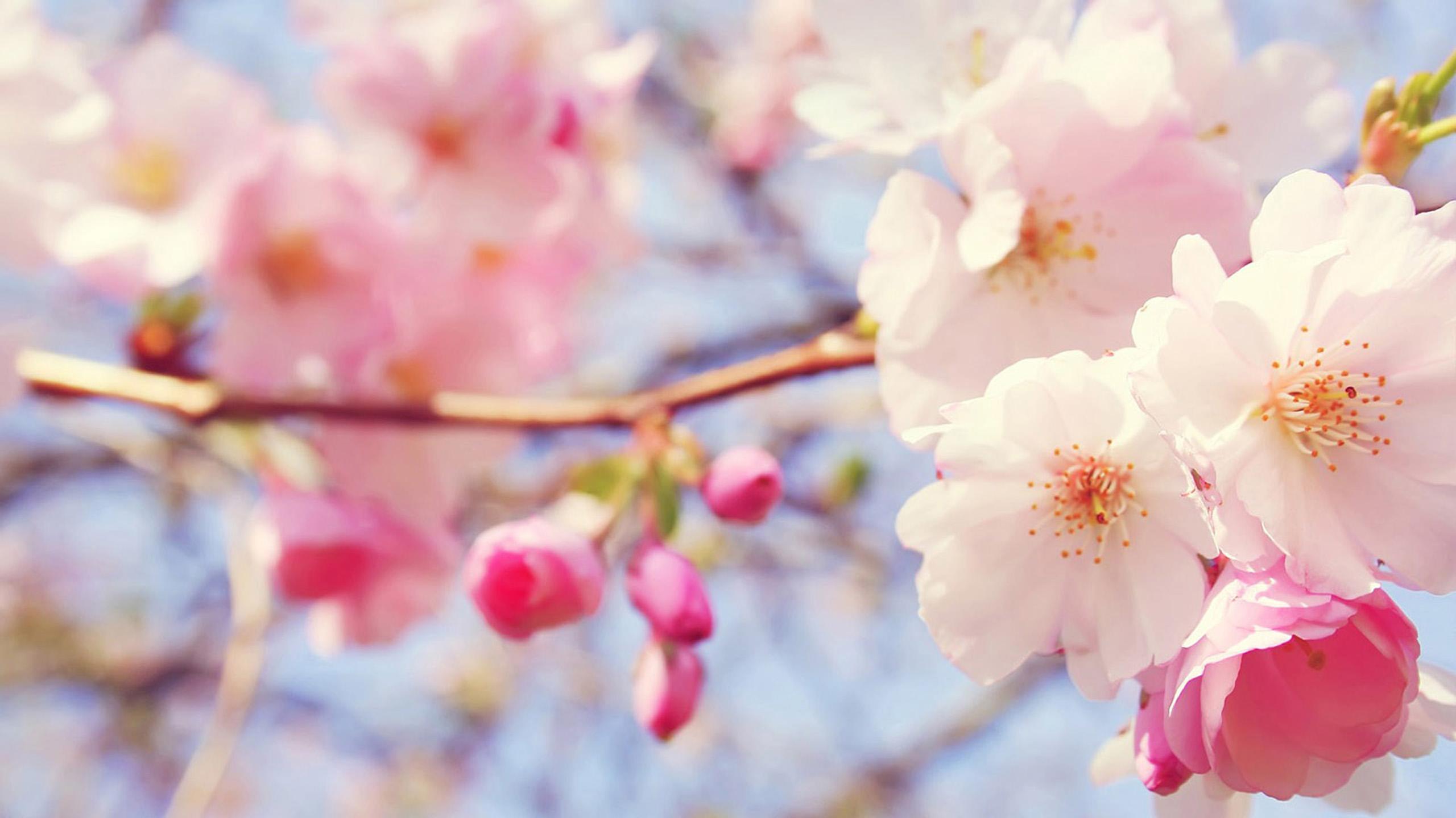 Beautiful Flowers Wallpapers 2560x1440