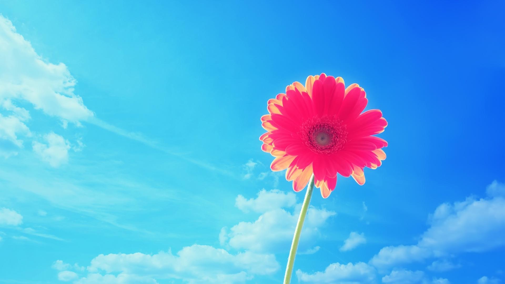 Blue Flowers Hd Desktop Wallpaper Widescreen High Definition 1920x1080