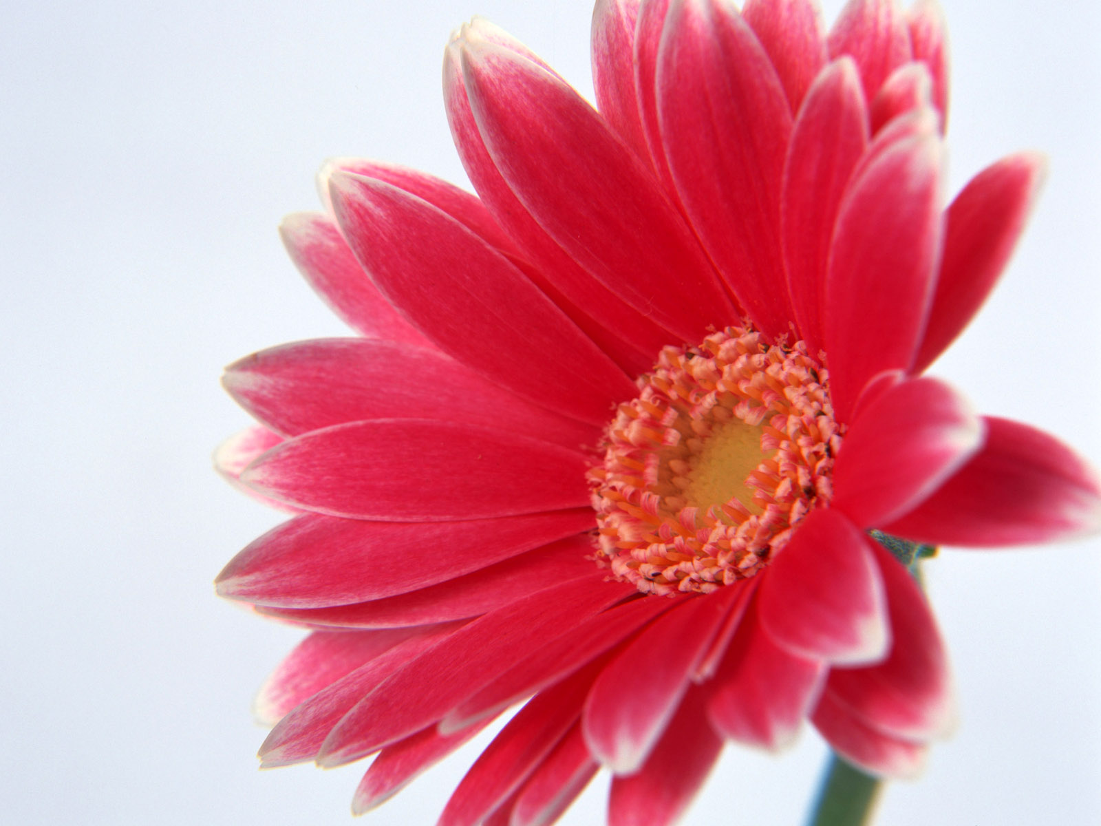 new flower wallpaper download 1600x1200