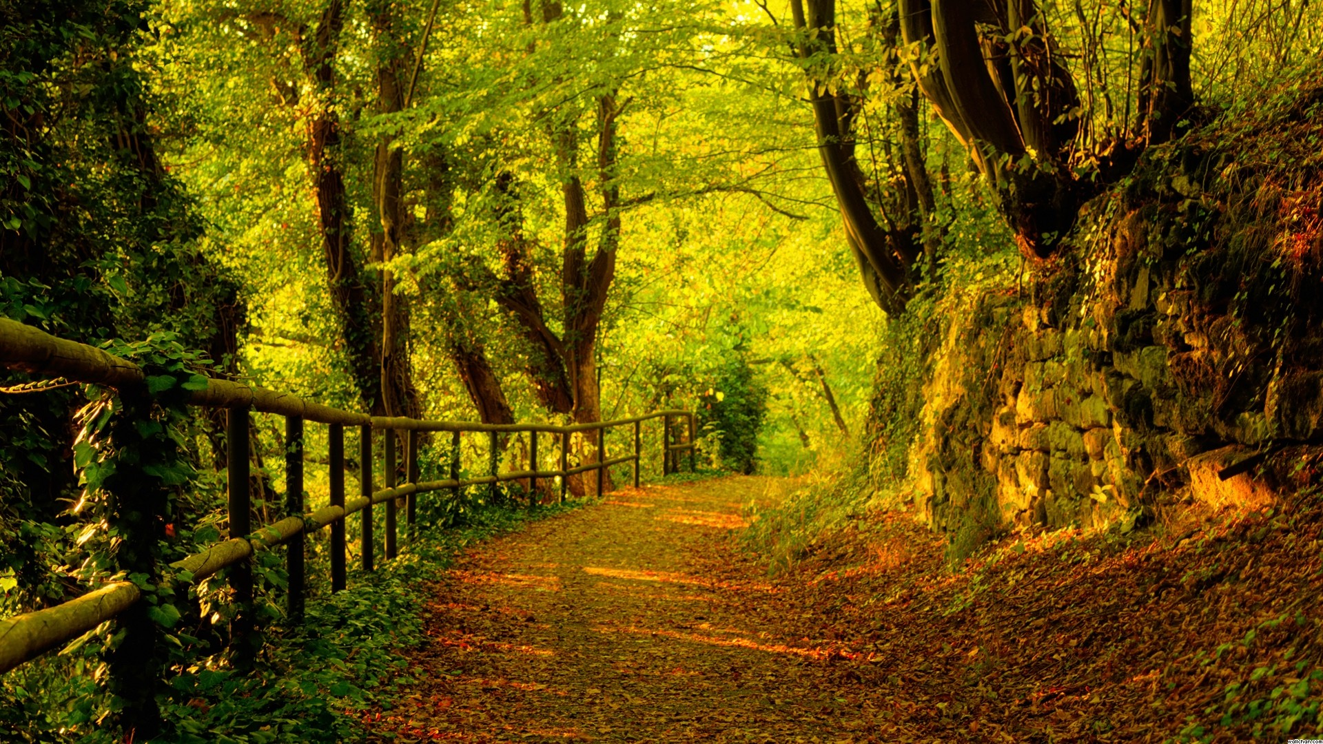 Most Inspiring Wallpaper High Quality Forest - Forest-Pictures-Wallpapers-013  Collection_525963.jpg