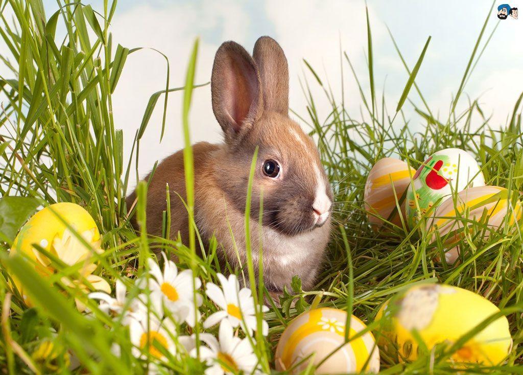 Free Cute Easter Wallpaper 1024x734