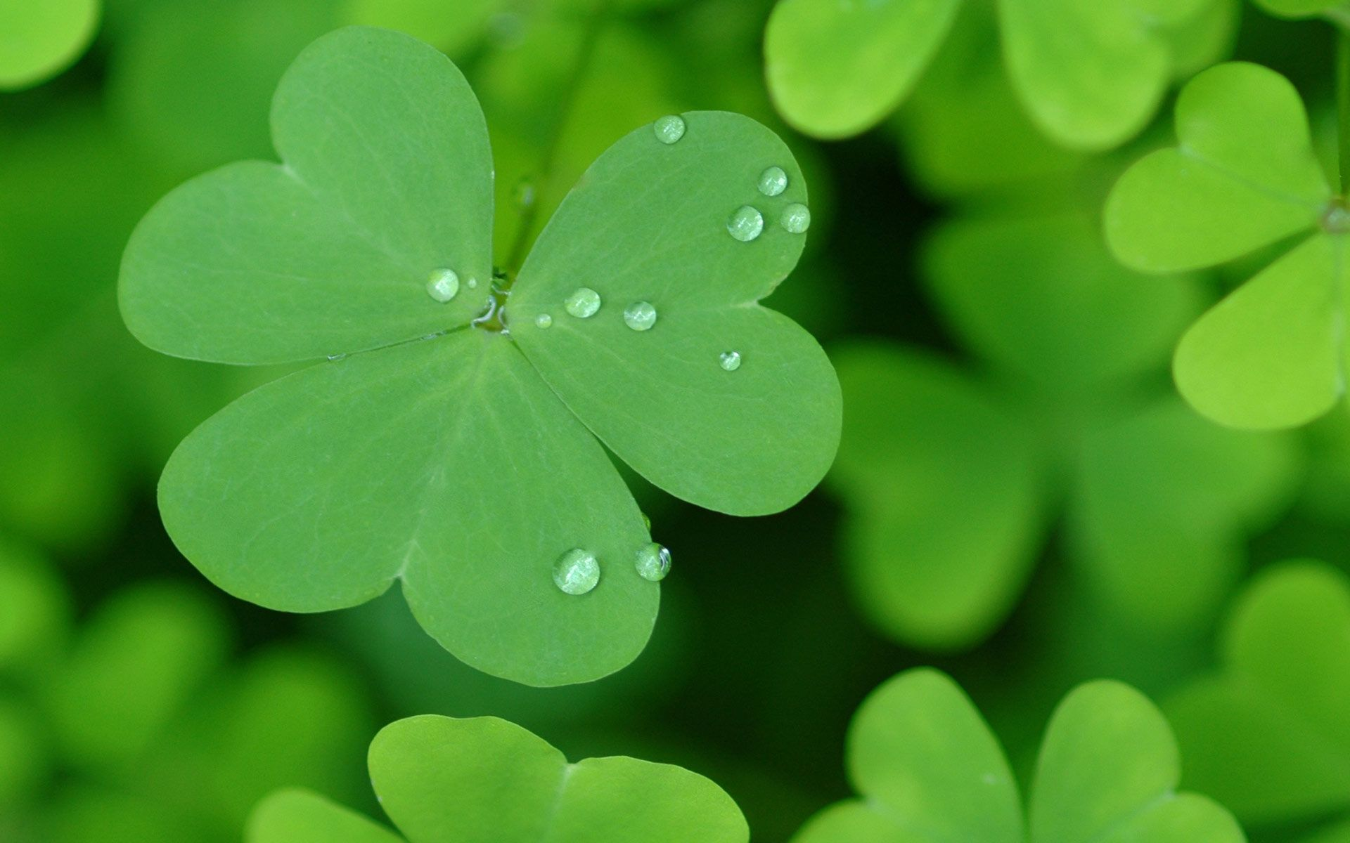St Patrick Day Wallpapers 1920x1200