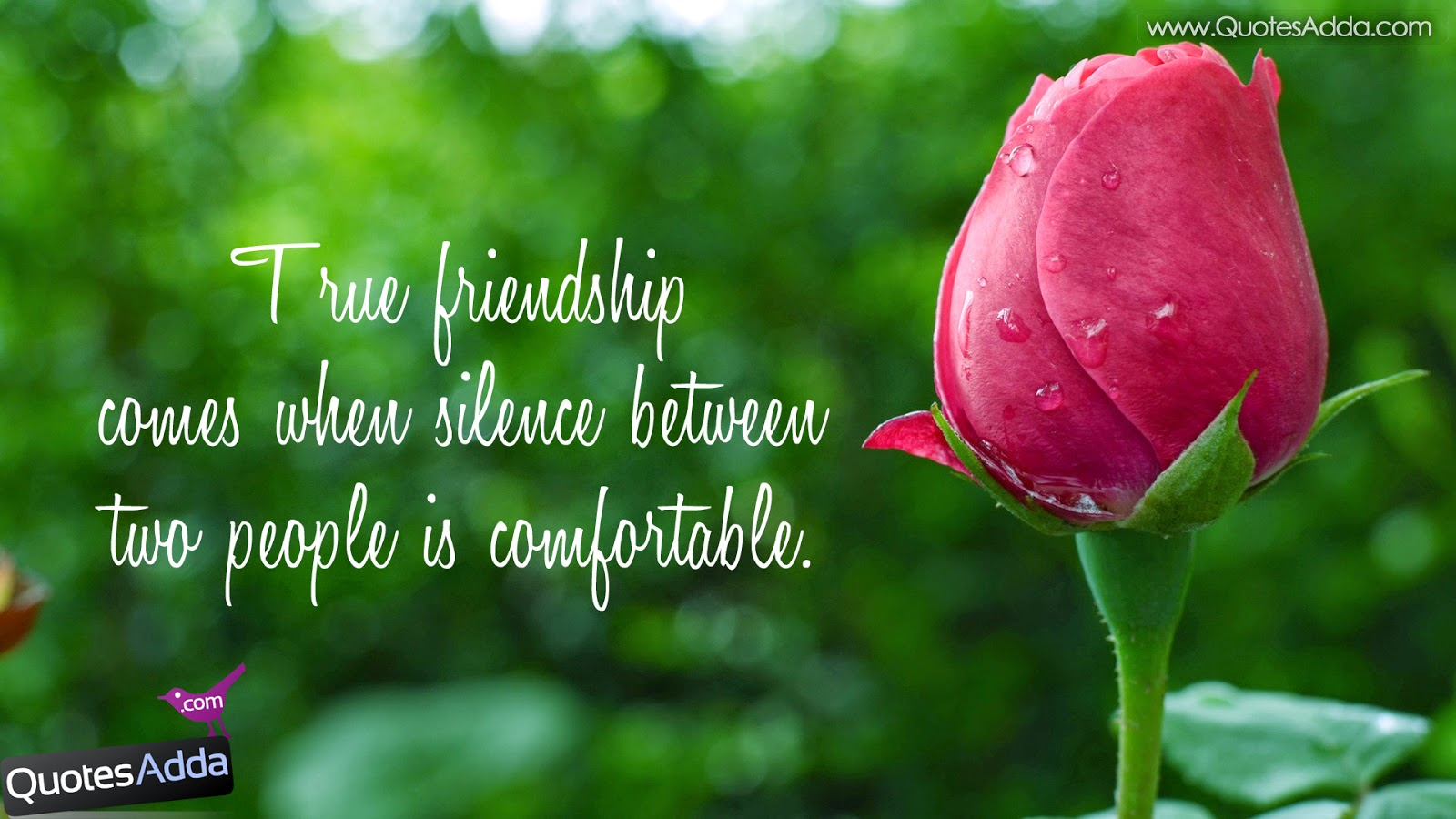 Quotes About Friendship Wallpapers Cute With Images 1600X900