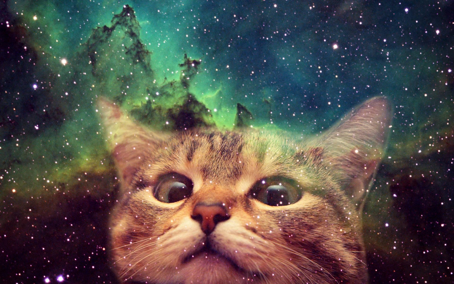 Fantastic Cat Wallpaper 1920x1200 - Galaxy-cat-wallpaper-052  Picture_712215 .jpg