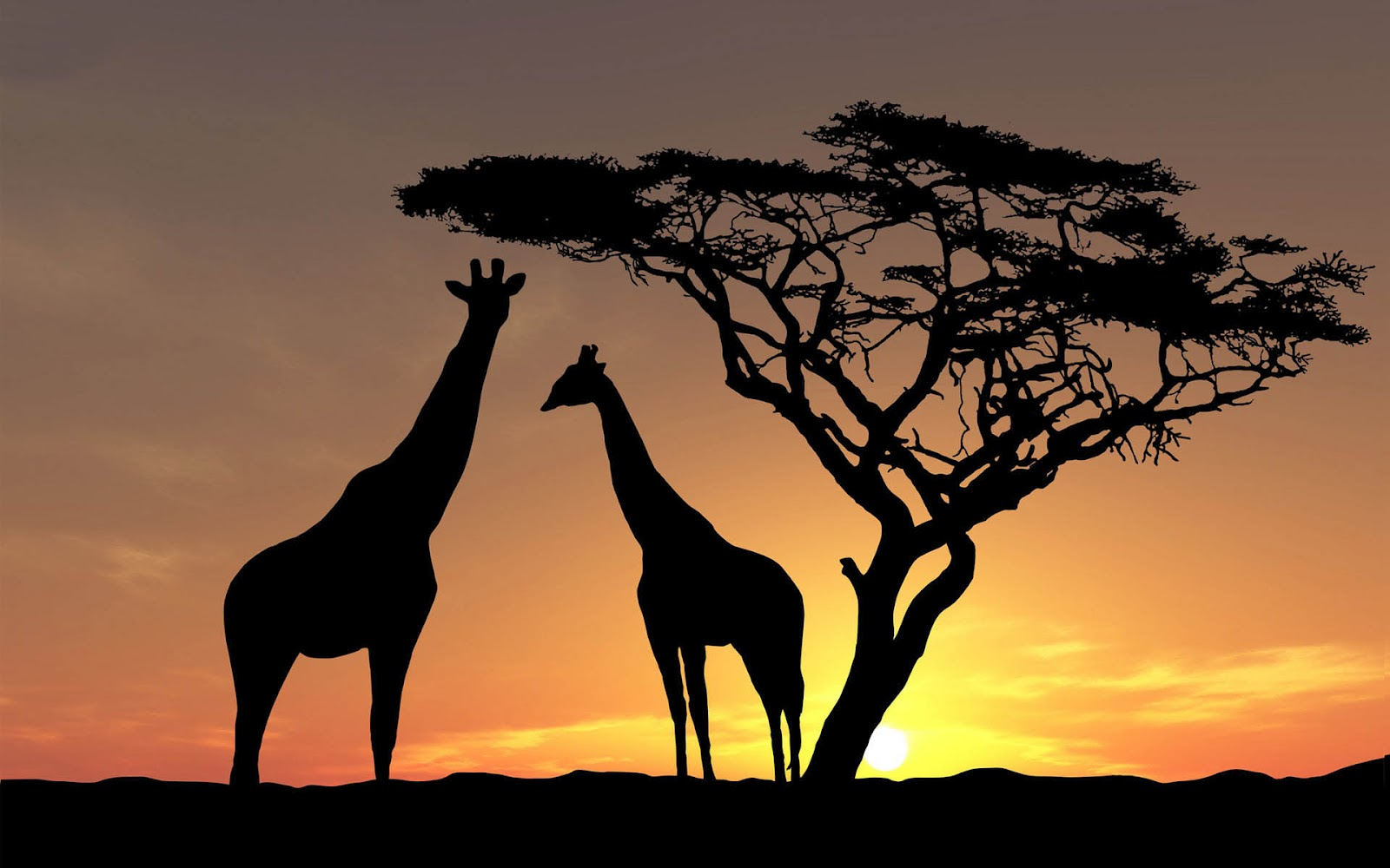 Giraffe HD Wallpapers  Backgrounds  Wallpaper  1600x1000