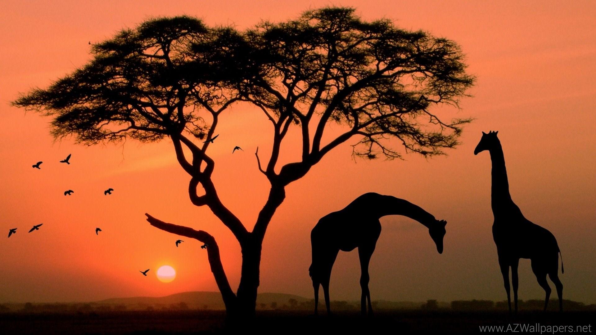 Best Wallpaper Colorful Giraffe - Giraffe-Desktop-Background-054  Image_469440 .jpg