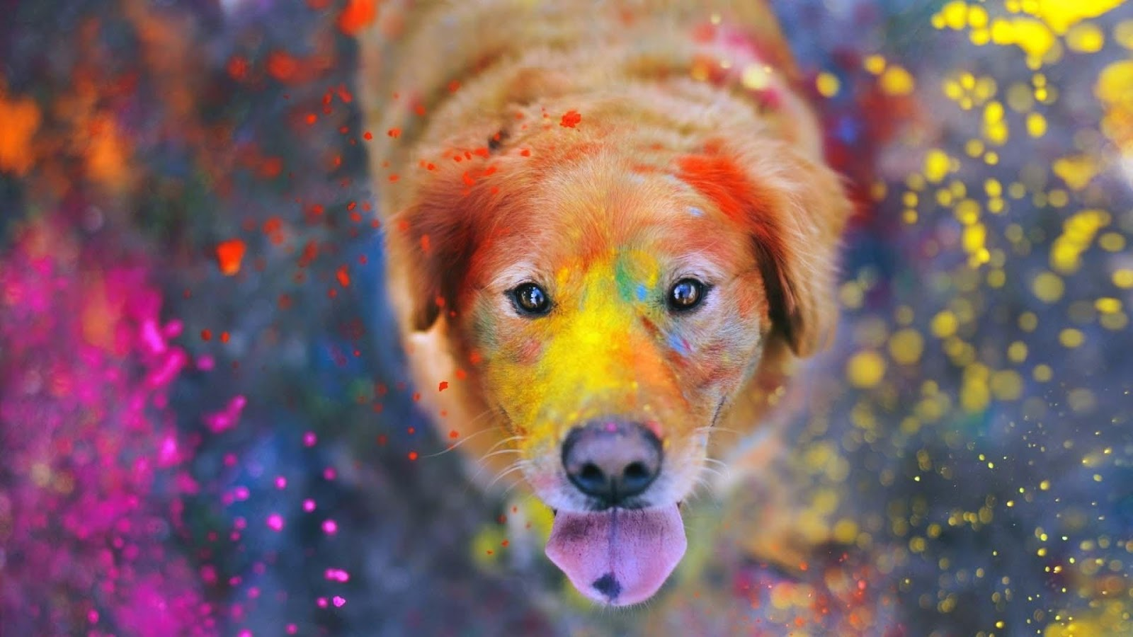 Golden Retriever Images Wallpapers 38 Wallpapers Adorable Wallpapers