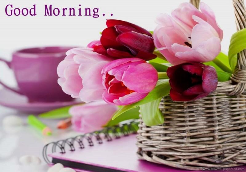 Good Morning Love Whatsapp Video Clip Pics Wallpaper Youtube 800x560