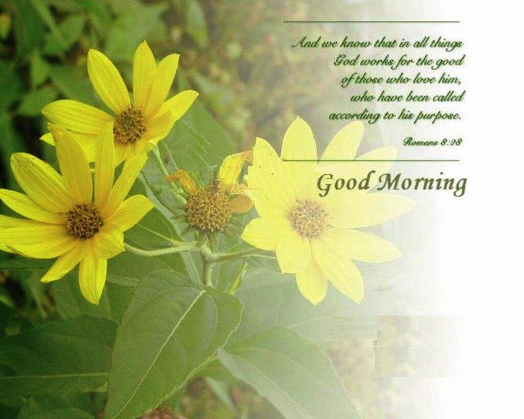 Good Morning Wallpaper  Android Apps on Google Play 1024x819