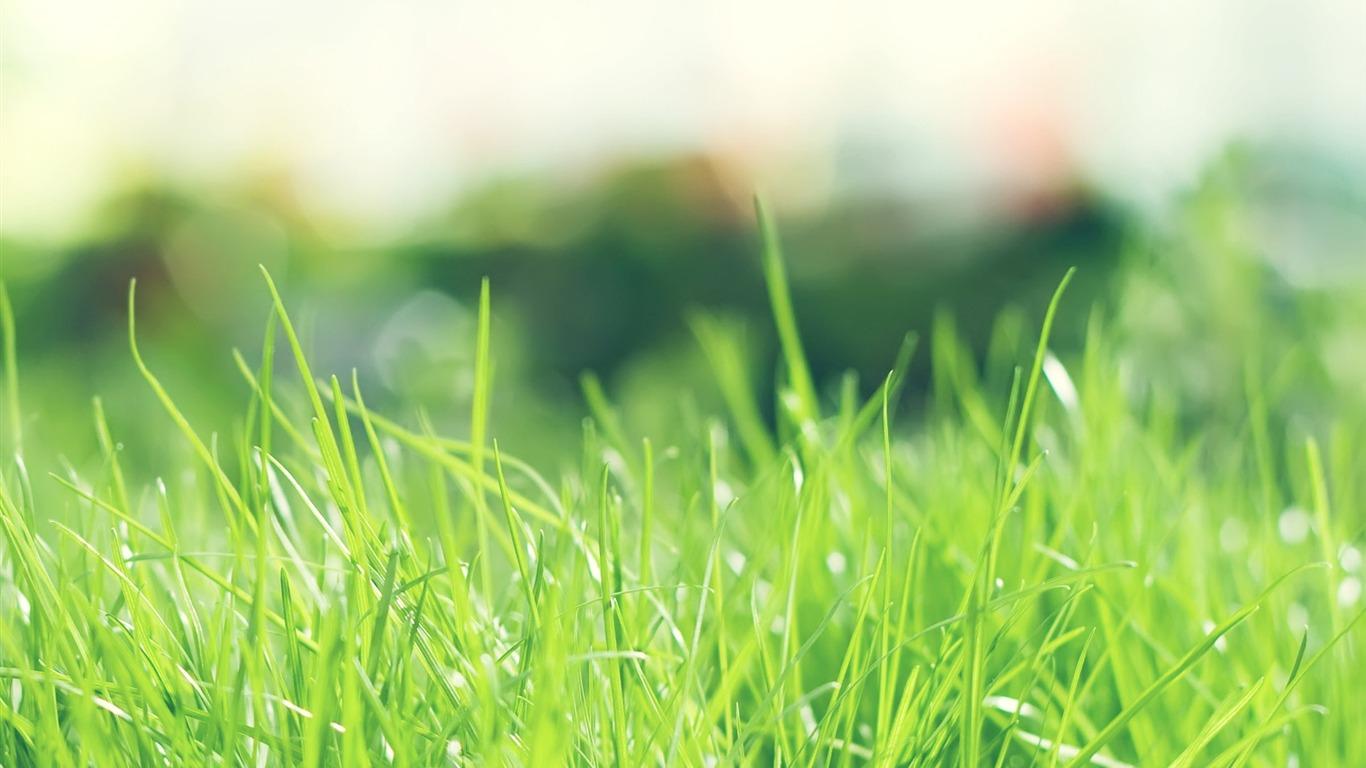The Best Green Grass Wallpaper Free Download