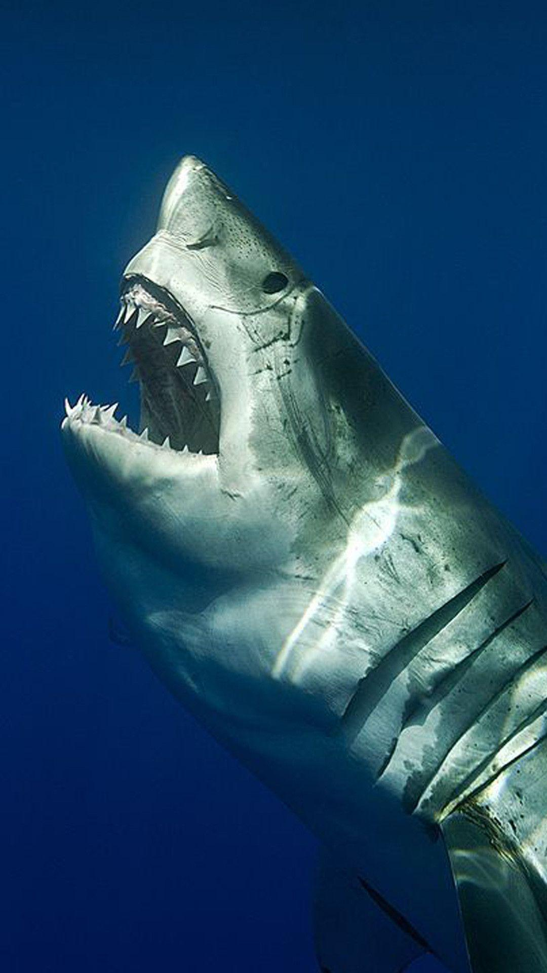 iPhone Shark Wallpapers on