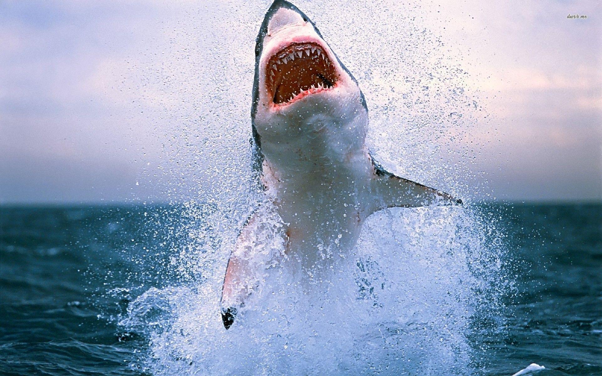 Wallpapers Iphone Artsy Pics In Shark Wallpaper