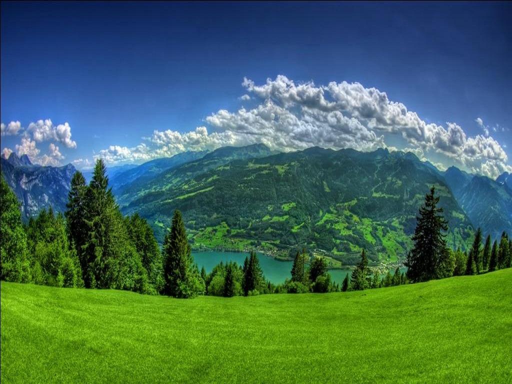 Download Green Garden Nature Mobile Wallpaper Toones 1024x768